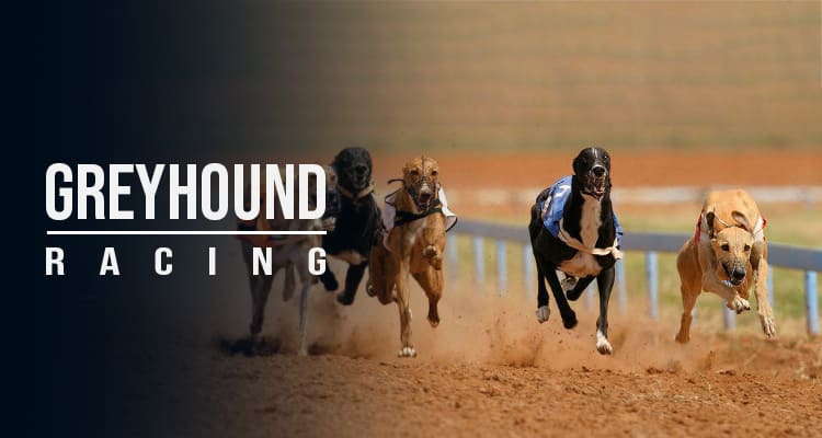 Dog track betting odds melbourne cup 2021 results sportsbetting